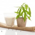 Hemp plant with glass of milk: Phytanna Hemp Oil and Healthy Living Blog