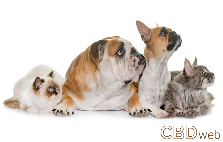 group of cats and dogs on white background